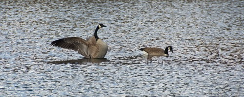 wilson-lake-inn_wildlife_05