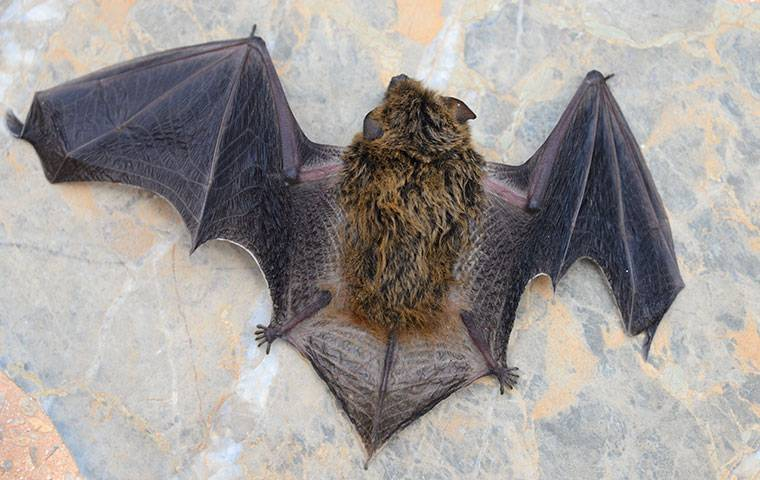 bat on a stone floor