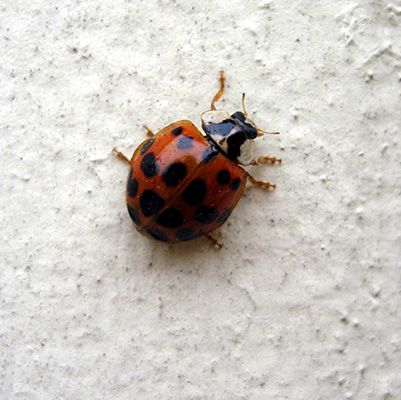 lady bug on wall