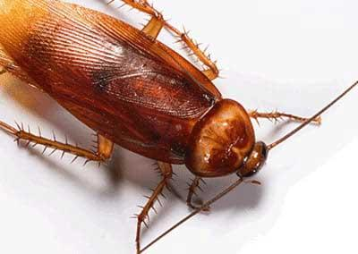 image of cockroach