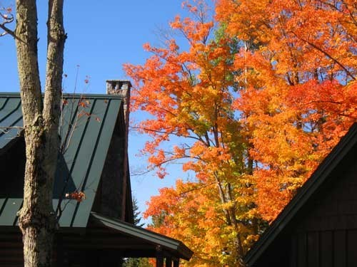 Fall Trees with Roofline