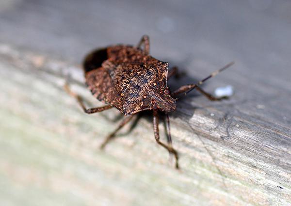 stink bug on a porch