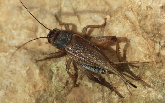 close up of cricket on basement floor