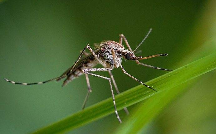 mosquito on blade grass