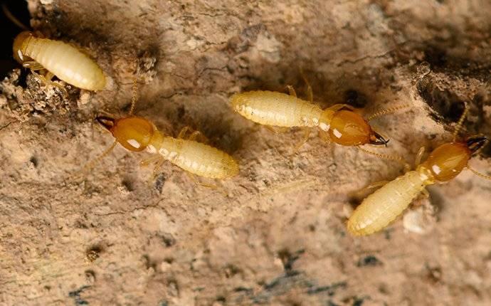 termites on a mound