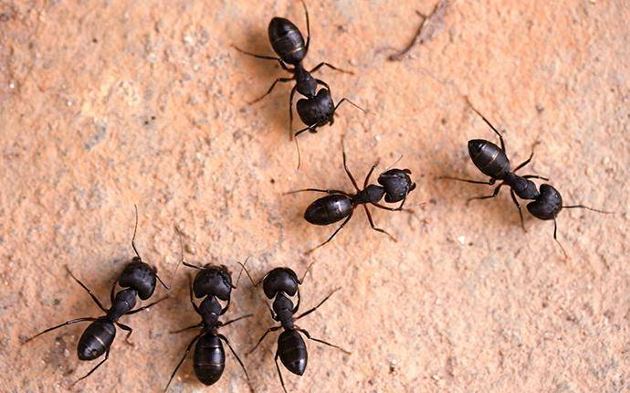 black ants on a wall