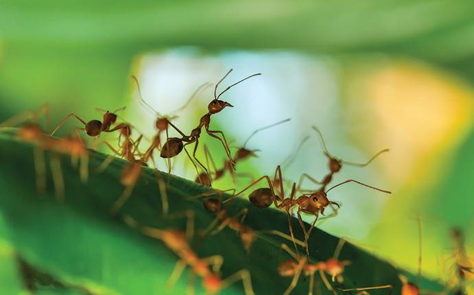 several fire ants crawling on plant