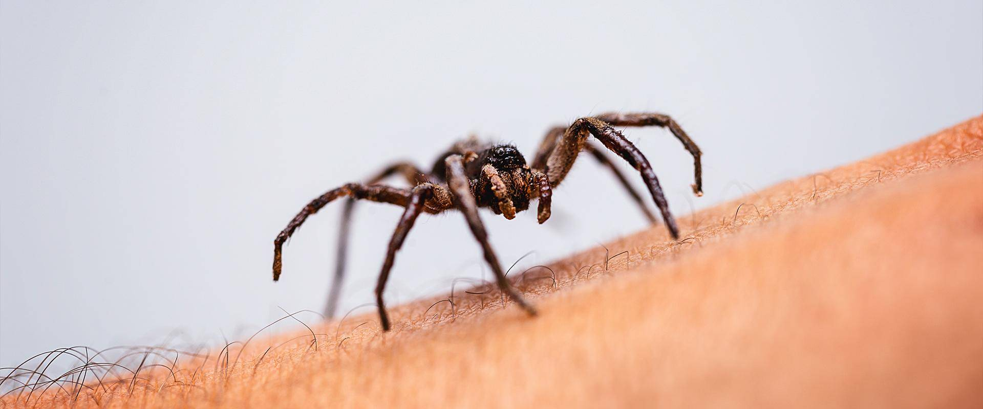 a spider on an arm