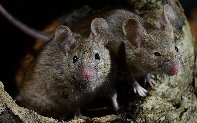 mice crawling in tree hollow