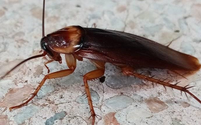 a cockroach