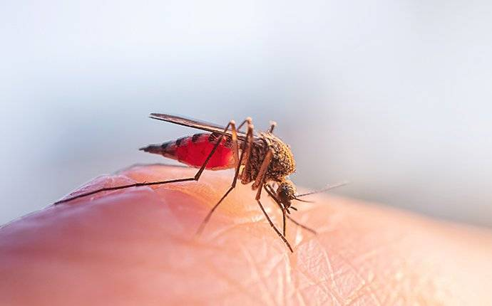 a mosquito on skin
