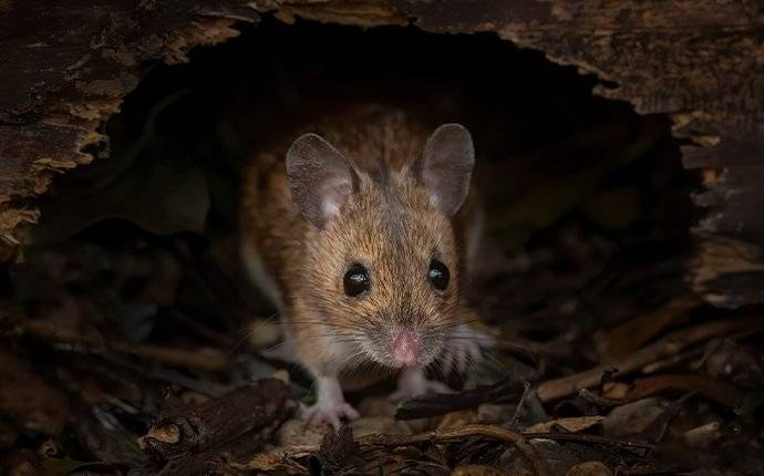 a mouse in a hole
