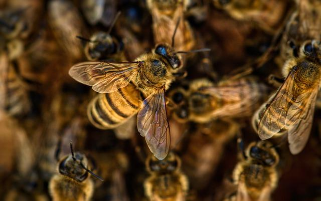 Close up of a mass of bees