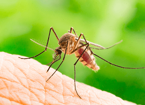 mosquitoes in albany