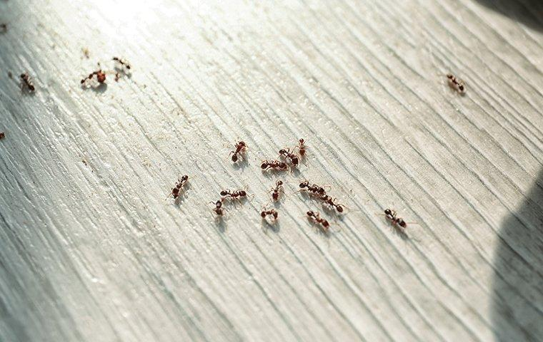 a colony of ants crawling on the kitchen floor