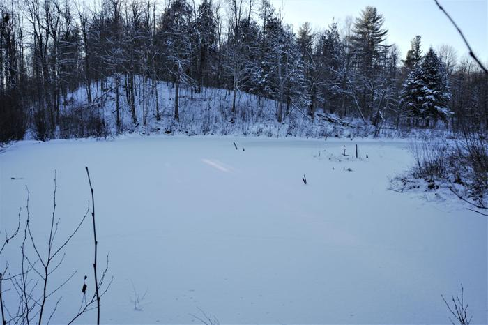 A well-established beaver pond near the start of the trail (Credit: https://hikingthetrailtoyesterday.wordpress.com/)