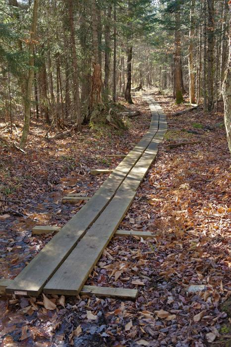 Boardwalk across some of the soggy portions. (Credit: Credit: Wm Hill- Hiking the trail to yesterday)