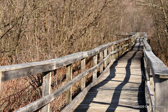 boardwalk/observation deck trail (Credit: C A Hill Photo)