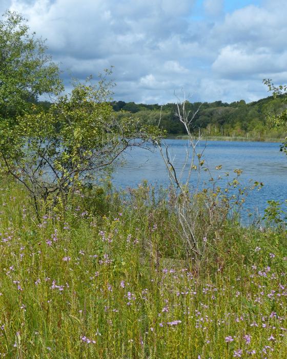 Robinson Bay (Credit: Nicandri Nature Center)