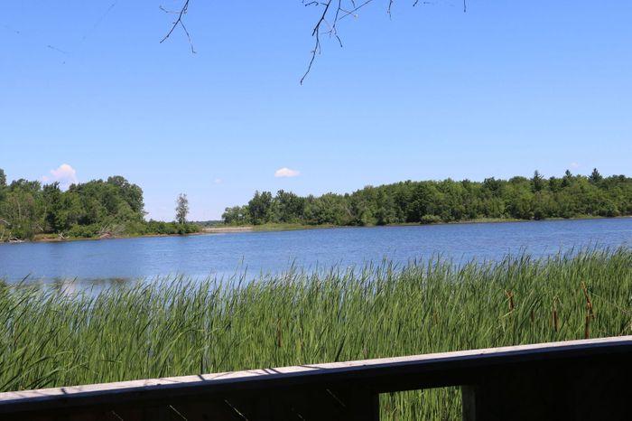 Pond view (Credit: Image credit)