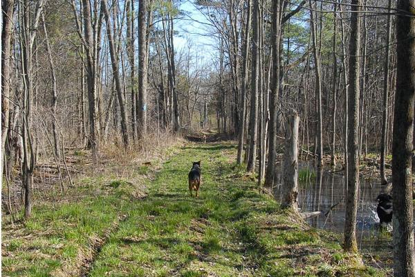 Dog enjoying the trail! (Credit: Thousand Islands Land Trust)