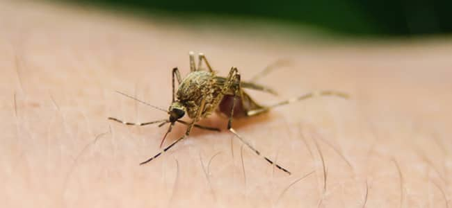 mosquitoes with west nile virus confirmed in maryland