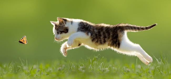 cat chasing bug in field
