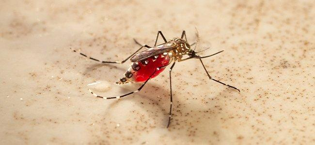 mosquito on counter top