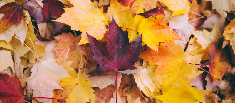How To Maintain Your Home For Fall