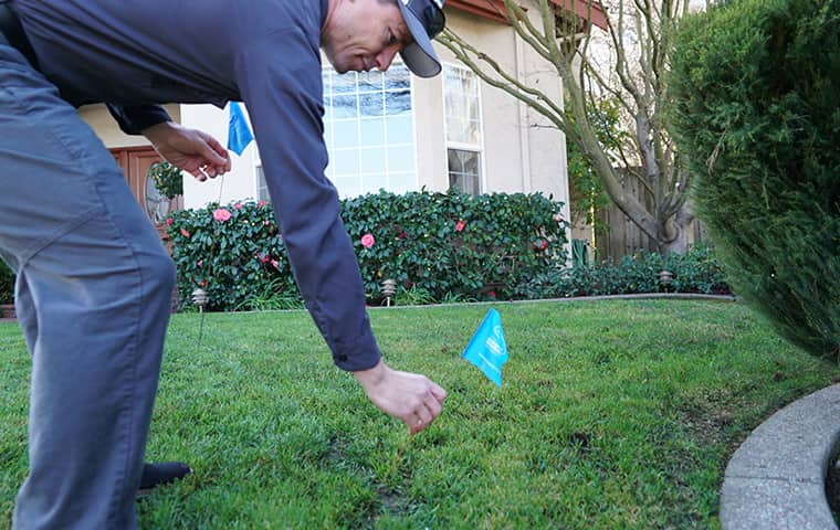 a smiths pest management service technician treating a yard in california bay area for ground squirrels