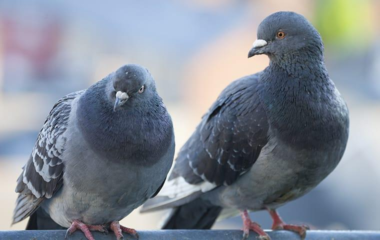 pigeons sitting on a building