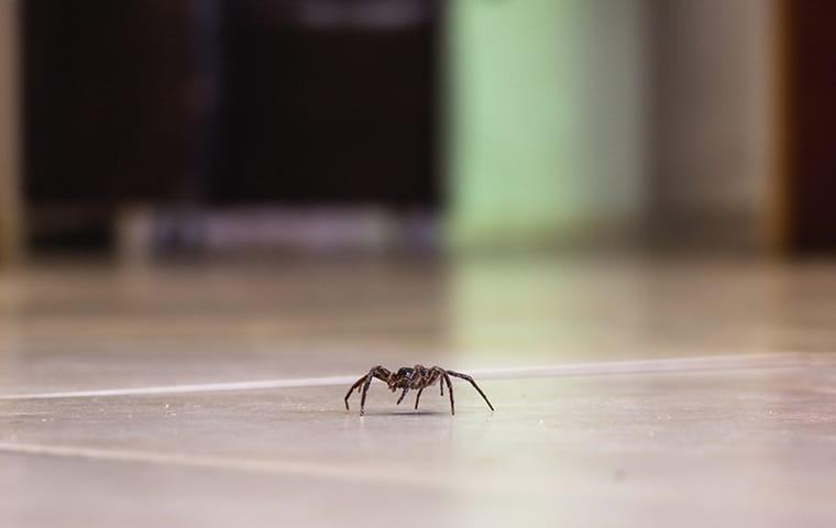 spider on floor in california home