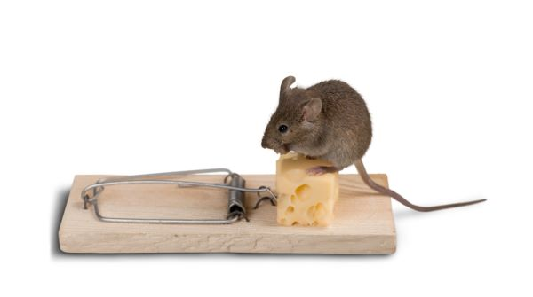 conventional mouse trap