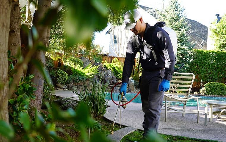 san francisco pest control tech treating yard with eco-friendly treatment
