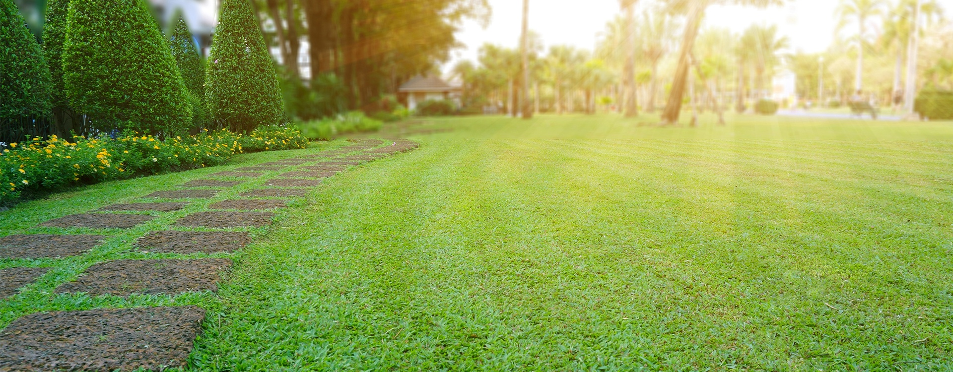 a well maintained residential lawn