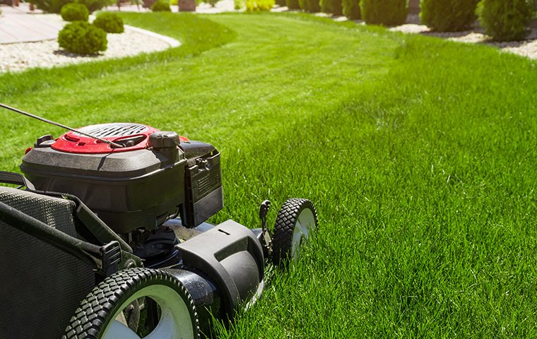 lawnmower mowing lawn to deter moles