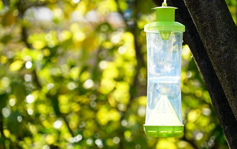 smiths gopher trapping service trap for stinging insects in a tree