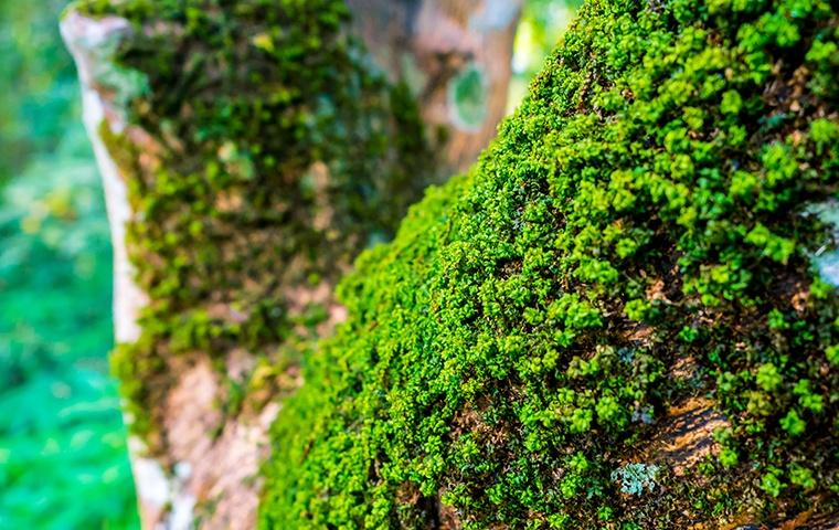 a large tree branch covered in moss