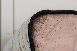 bedbug invasion.jpg