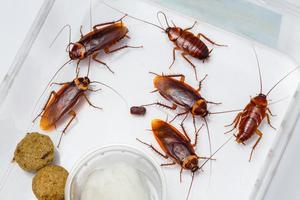 cockroach army.jpg