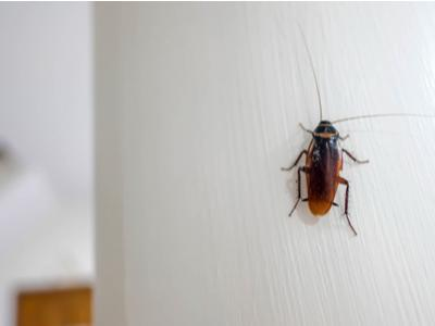 cockroach on wall.jpg