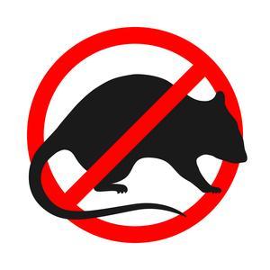 stop sign rat.jpg