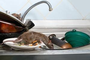 rodent roommate.jpg
