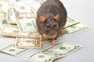 money rats money rats money rats.jpg