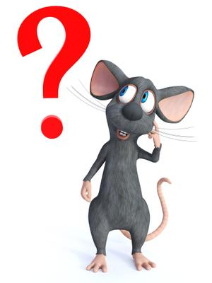 question rat.jpg