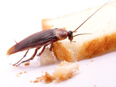 roach food.jpg