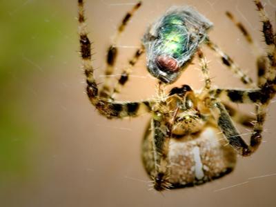 why spider.jpg