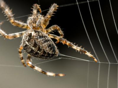 what spider.jpg