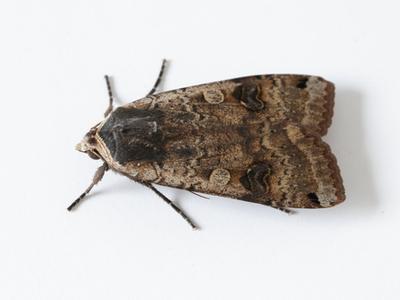 moth summer.jpg