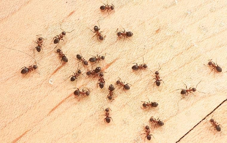ant colony in east nashville